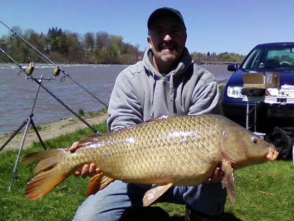 common carp pictures. Largest Common Carp of the