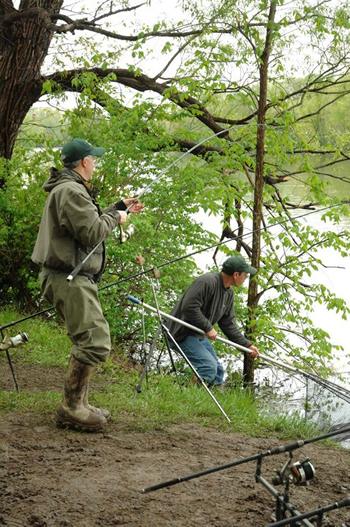 Bill Markle nets a fish for Kent Appleby during Wild Carp Week 2011.